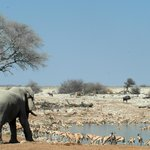 Elephants rule the waterhole here!