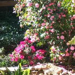 Adelaide Hills Bed and Breakfast Accommodation의 사진
