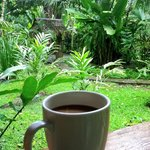 Coffee and a jungle view
