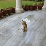 Kitty from Sham Nath Villa