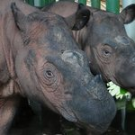 Rhino Center is well-run and a treat to visit (not always accessible due to mating rhinos)