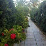 lovely well maintained garden area