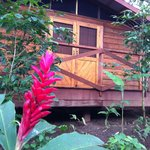 Our cabin was surrounded in coffe plants, giant trees and beautiful flowers.
