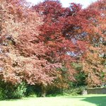 Foto van Copper Beeches