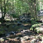 Great Smoky Jellystone Camp-Resort의 사진