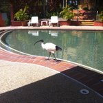 Bird at pool
