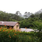 Bilde fra V-Resorts Almora / Pug's Paw Eco Retreat
