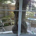 View of the pine tree and deck from the Deck House window