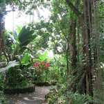 Photo of Hilo Tropical Gardens