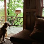 Gus loves the bird's eye view from the tree house~