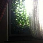 Ivy on window