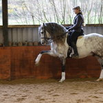 Pen Llyn Lusitano Stud and Riding Centre