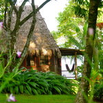 Foto de Bosque del Cabo Rainforest Lodge