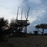 The treehouse at sunset