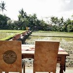 The view from Rama room/patio overlooking the paddy field