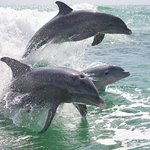 Island Time Dolphin and Shelling Cruises