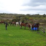 Foto de Farm 215 Nature Retreat & Fynbos Reserve
