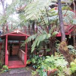 Entrance to Volcano Tree House