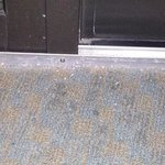 stained carpet with metal shavings.