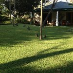 Wonderful morning at York Lodge in Harare, room 7 in the background