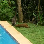 wildlife near the private pool