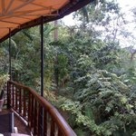 Amazing treetop view from the restaurant.
