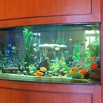 Fish Tank In The Lobby