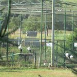a large Stork Cage on the property with 4 storks & a rabbit