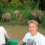 The pygmy elephants along the river during the cruise