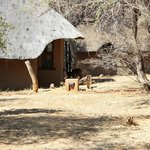 Foto de Madikwe River Lodge
