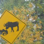hilarious road signs 2