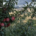 Chelan, Washington is apple country!