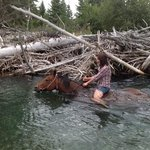 swimming with horses an amazing experience