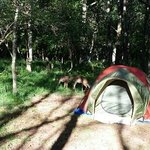 Foto de Big Meadows Campground