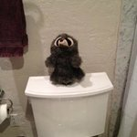 Stuffed Animal Atop The Toilet