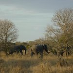 Foto de Baobab Ridge - Greater Kruger