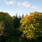 Autumnal view from Devenick suite