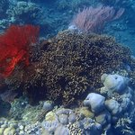 Reef life around Bunutan 2