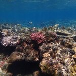 Reef life around Bunutan 3