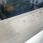 pigeon droppings