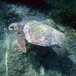 Caretta's Nestの写真