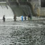 Salmon fishing at the dam at Hamlin Lake