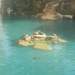 Turtles in the turtle pool outside the hotel