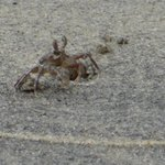 Crabs in the beach bed - Tiny ones :)