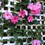 trellis up close