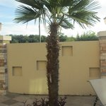 Palm tree in pool area