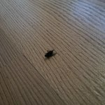 Example of a dead fly in the room
