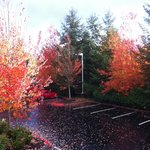 Foto di Extended Stay America - Seattle - Redmond