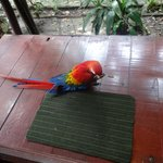 Amazon Eco Park Jungle Lodge의 사진