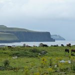 Cliffs of Moher, Doolin, Ireland ©2013 jbrock